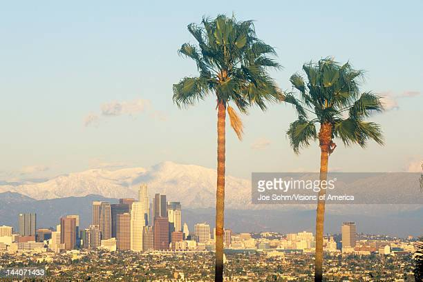 Two palm trees Los Angeles and snowy Mount Baldy as seen from the Baldwin Hills Los Angeles California