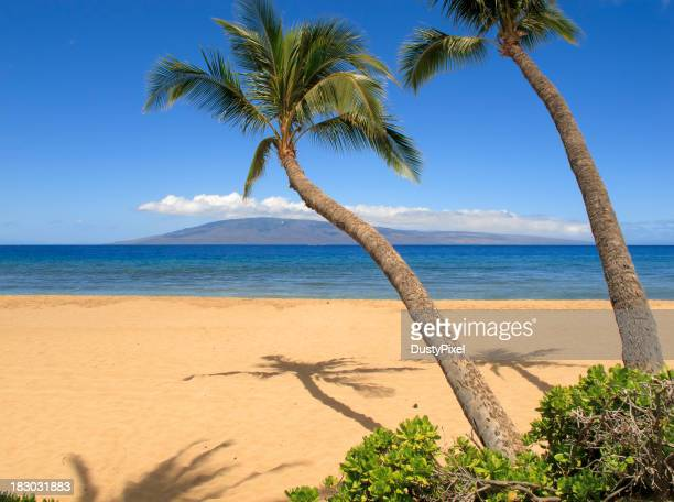 Two palm trees on a tropical beach