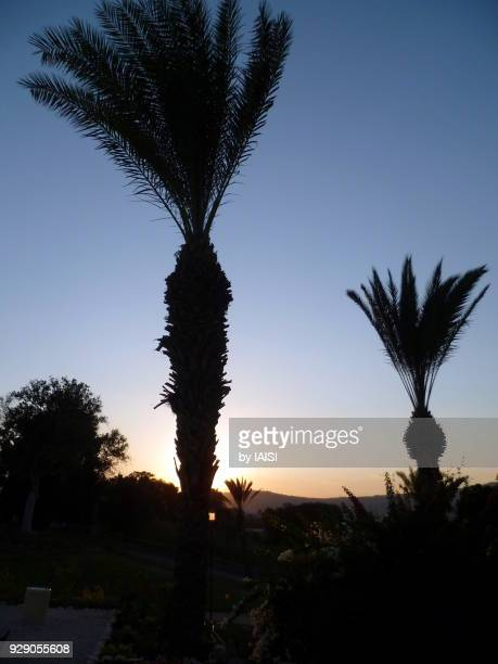 Two palm trees silhouetted in the twilight near Lake Tiberius