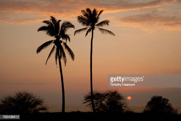 two palm trees with sun setting into the ocean - timothy hearsum stock pictures, royalty-free photos & images