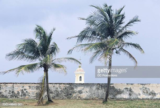 Two palms  by sea, El Morro, Old San Juan, Puerto Rico