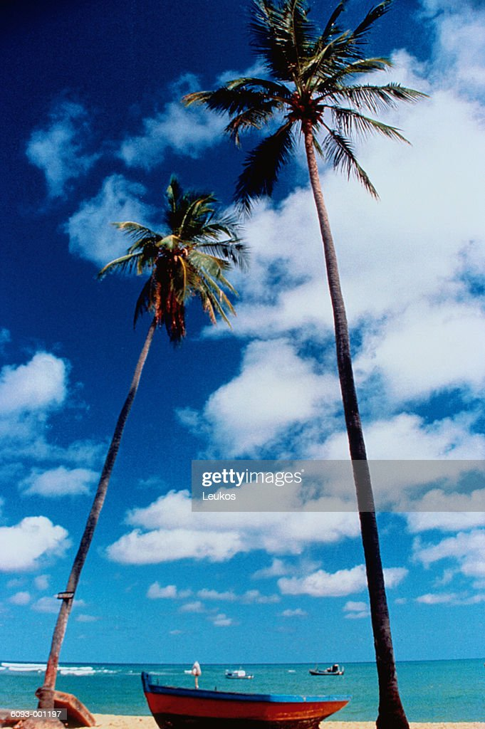 Two Palms on Beach : Bildbanksbilder