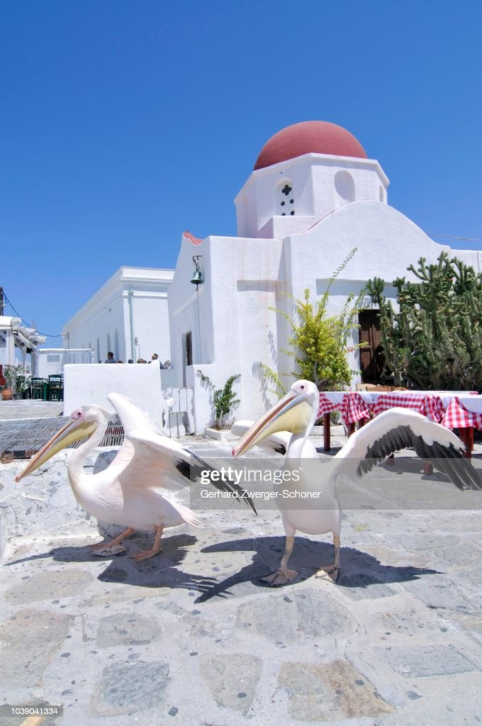 Two pelicans at the main square in front of a Greek domed church with a red roof, tourist attraction in Mykonos city, Mykonos, Cyclades, Greece : Stock Photo