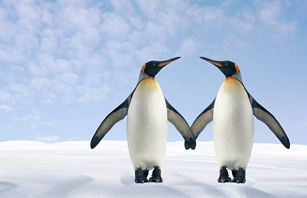 Two Penguins Holding Hands Wall Art