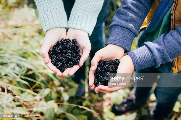 two people holding blackberries in cupped hands - foerageren stockfoto's en -beelden