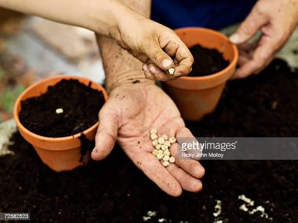 two people holding seeds, close up of hands - zaad stockfoto's en -beelden