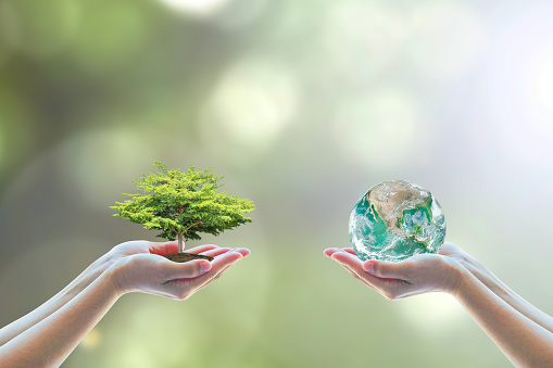 Two people human hands holding/ saving growing big tree on soil eco bio globe in clean CSR ESG natural sunlight background World environment day go green concept Element of the image furnished by NASA 948551412