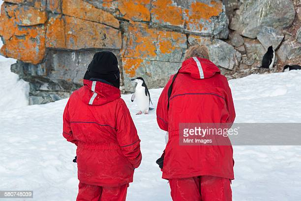 two people observing a chinstrap penguin on halfmoon island. - atlantic islands stock pictures, royalty-free photos & images