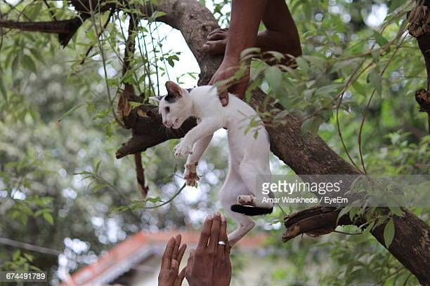 two people rescuing cat from tree - rescue stock pictures, royalty-free photos & images