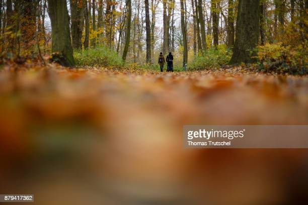 Two people take a walk through a autumnal forest on November 19 2017 in Luebben Germany