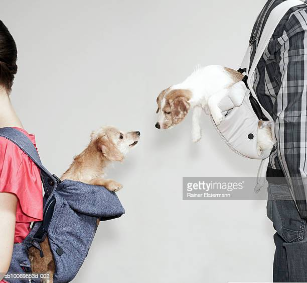 Two people with dogs in baby slings, side view, studio shot