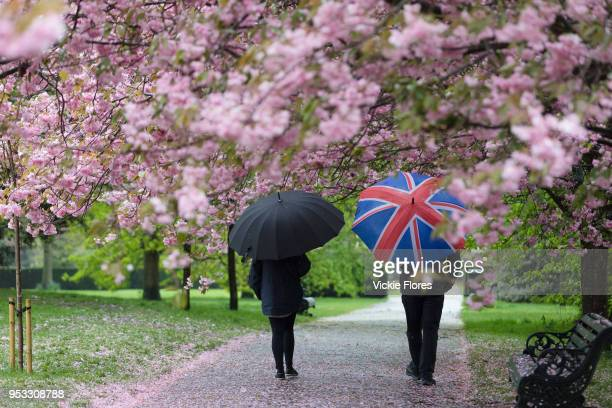Two people with umbrellas walk under cherry blossom trees during rain and wet weather on April 30 2018 in Greenwich Park in London England