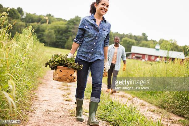 two people working on an organic farm. carrying baskets of fresh picked vegetables. - organic farm stock pictures, royalty-free photos & images