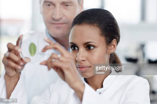 two persons examining a green leaf in laboratory - botanist stock pictures, royalty-free photos & images