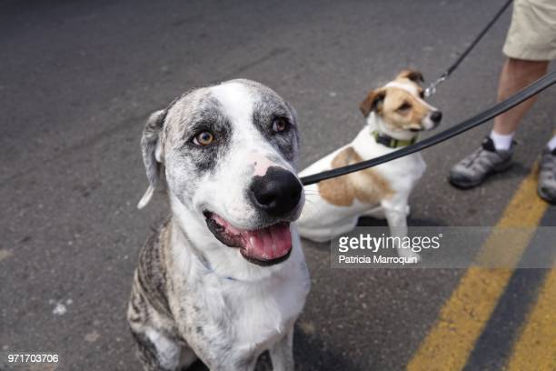 Two pet dogs on a city street