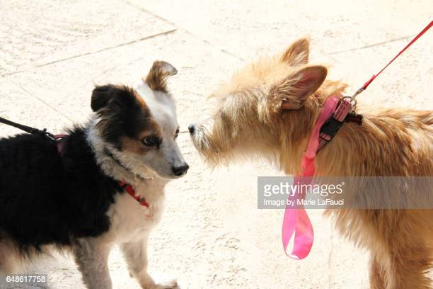 Two pet dogs on leashes