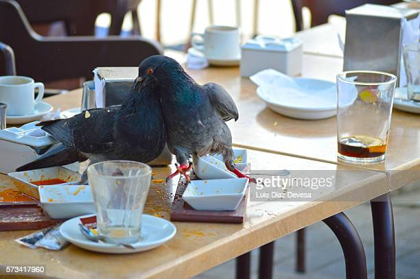 two Pigeons fighting at table of cafe
