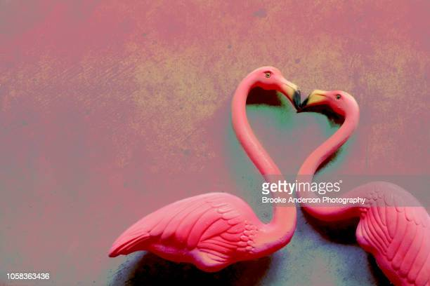 two pink flamingos kissing - flamingo heart stock pictures, royalty-free photos & images