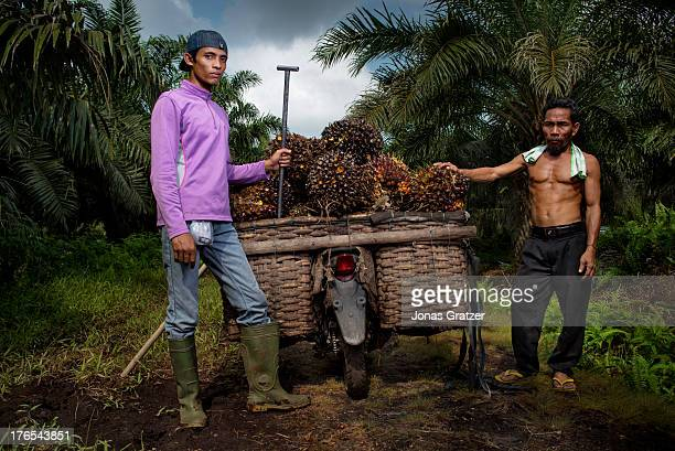 Two plantation workers load up the motorbike with palm fruit to be transported and sold A village of green revolution Dosan produces biofuels such as...