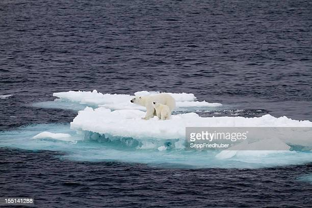 two polar bears on a small ice floe - ijsschots stockfoto's en -beelden