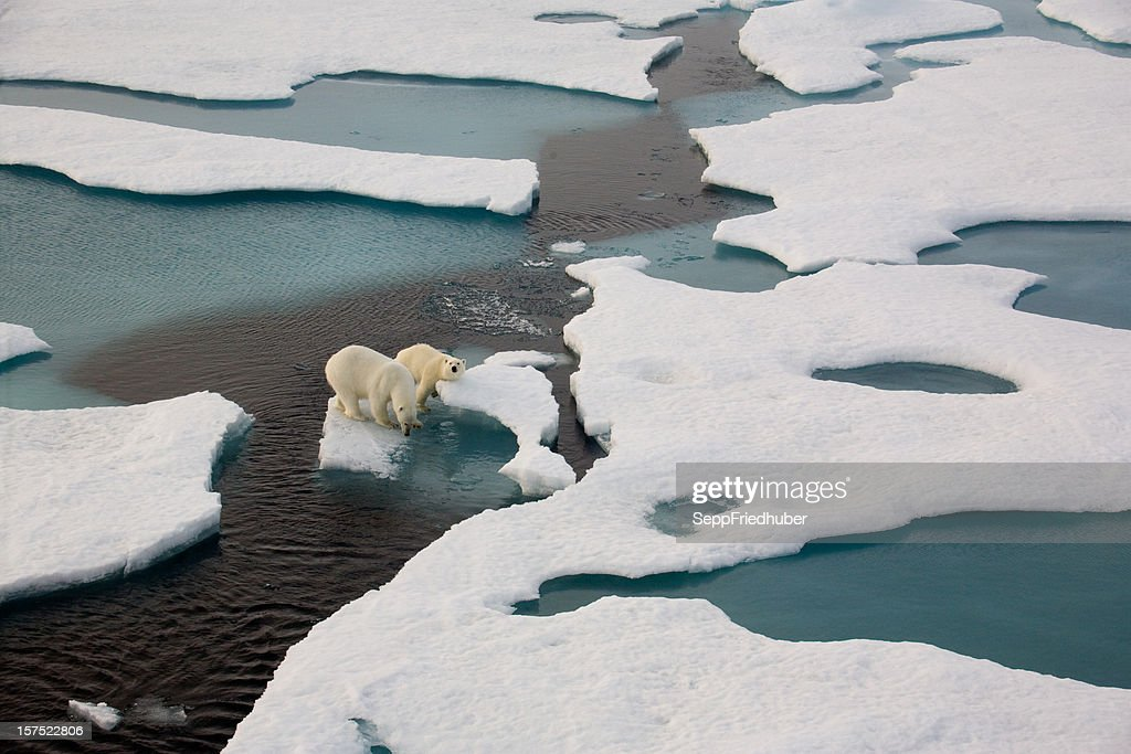 Two polar bears on ice flow surrounded by water : Stock Photo