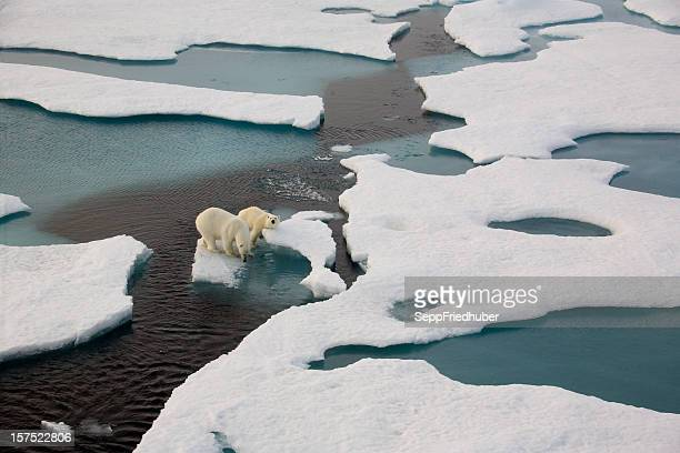 Two polar bears on ice flow surrounded by water
