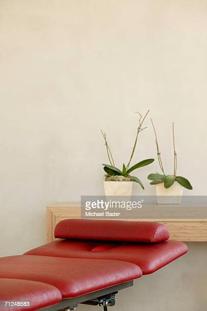 two potted plants in front of wall on shelf by red chair - psychiatrist's couch stock pictures, royalty-free photos & images