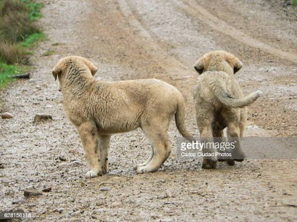 two puppies alone on a dirt road - desaparecidos imagens e fotografias de stock