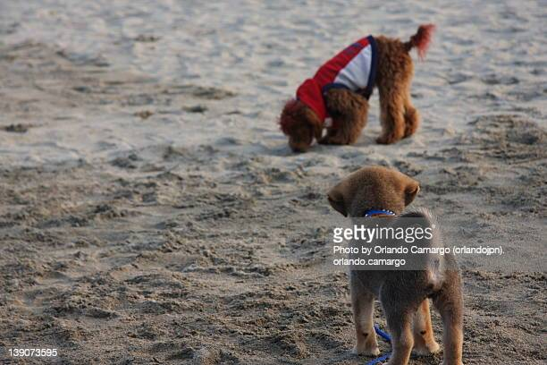 two puppies on sand beach - special:whatlinkshere/file:lucerne_circle,_orlando,_fl.jpg stock pictures, royalty-free photos & images