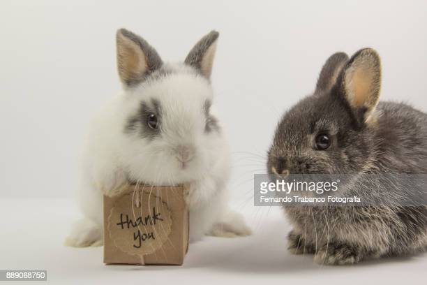 two rabbits with gift box - happy birthday cat stock photos and pictures