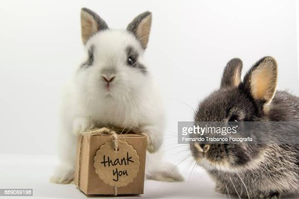 Two rabbits with gift box