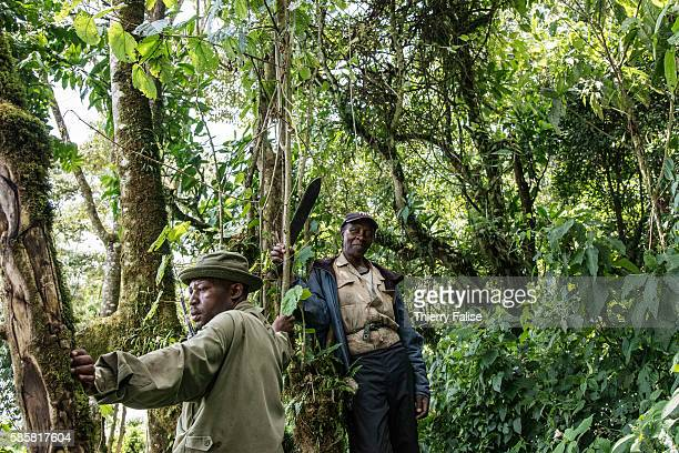 Two rangers working in the Virunga National Park stand near the park entrance The Virunga park created in 1925 under the name of Albert National Park...