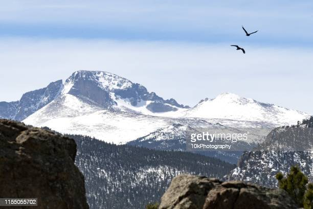 two ravens flying over longs peak, rocky mountains, colorado, united states - front range mountain range stock pictures, royalty-free photos & images