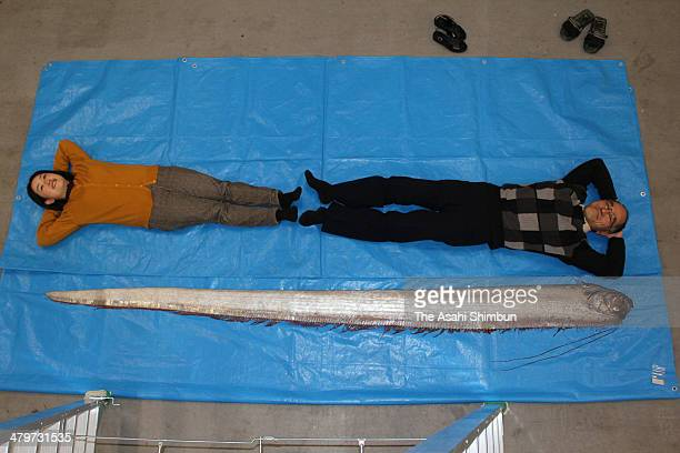 Oarfish Stock Photos and Pictures | Getty Images King Of Herrings