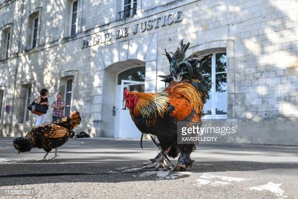 Two roosters stand outside the high court in Rochefort western France on July 4 2019 where the justice is set to rule on whether a lively cockerel...