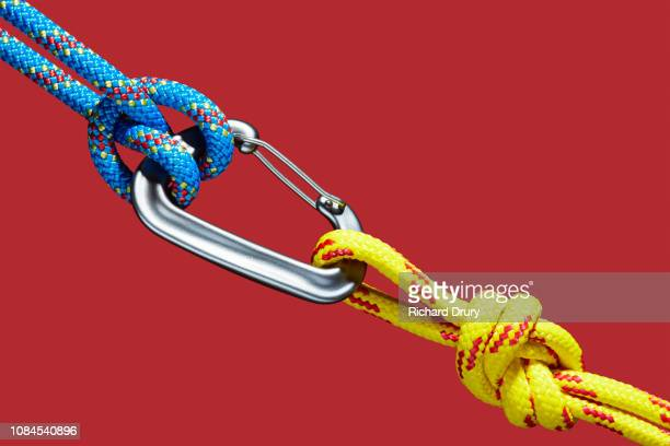 two ropes connecting to carabiner - climbing equipment stock pictures, royalty-free photos & images