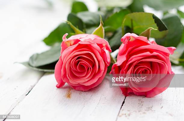 Two rose blossoms on white wood