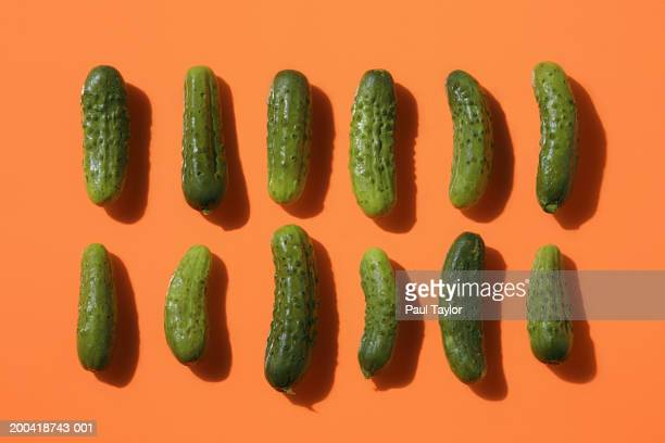 two rows of pickles - キュウリ ストックフォトと画像