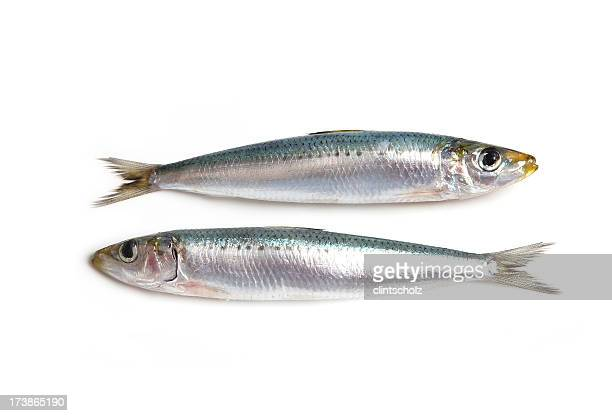 Dos Sardines