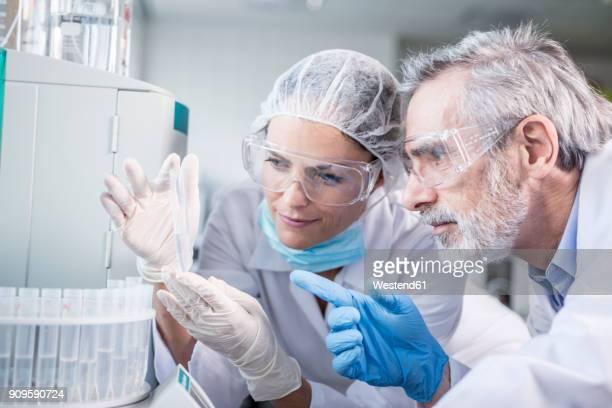 two scientists examining samples in lab - científico fotografías e imágenes de stock