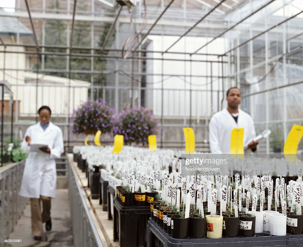 Two Scientists Next To Large Number of Potted Plants in a Greenhouse : Stock Photo