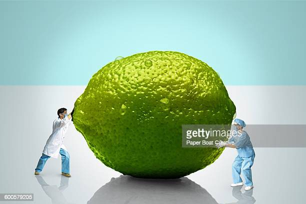 two scientists trying to move a giant lime