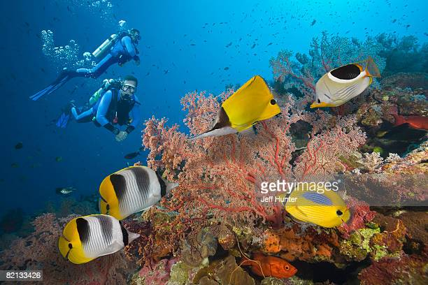 two scuba divers on great barrier reef - great barrier reef stock pictures, royalty-free photos & images