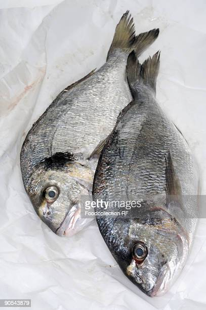 Two sea bream on paper, overhead view