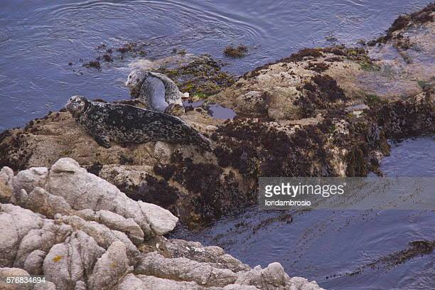 Two sea lions on the rocks in the ocean.