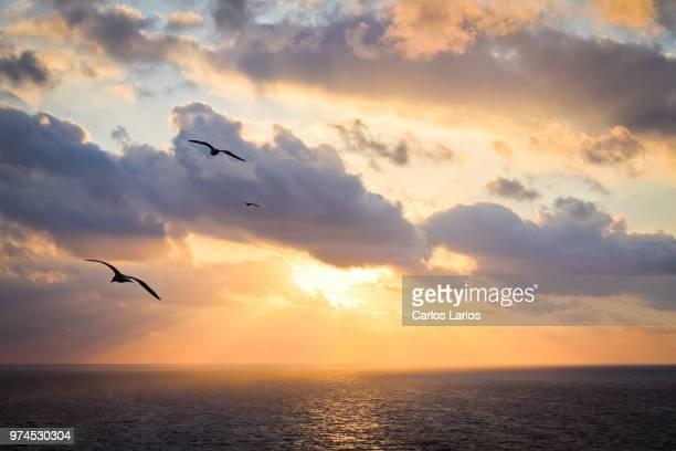 two seagulls against sunrise sky, spain - カモメ科 ストックフォトと画像