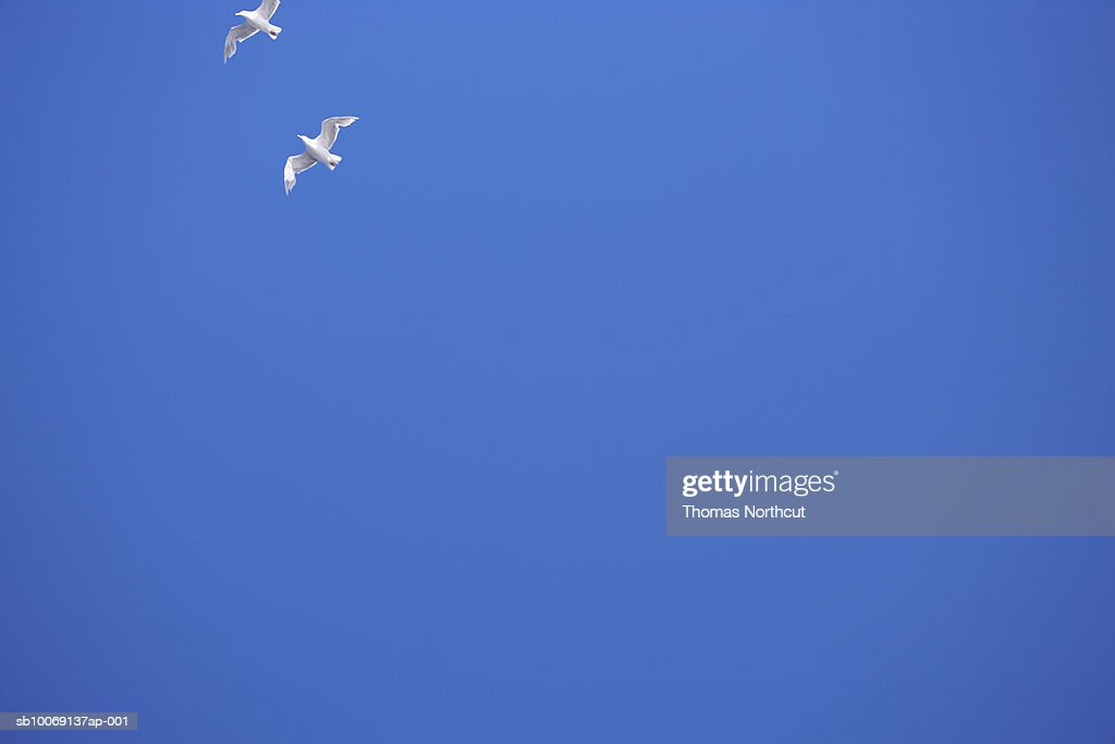 Two seagulls and blue sky : Stockfoto