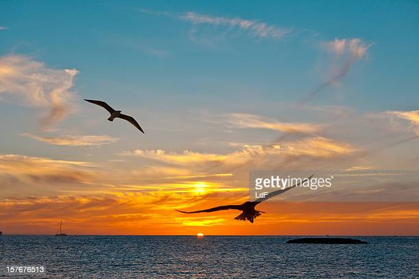 Two seagulls at the sunset