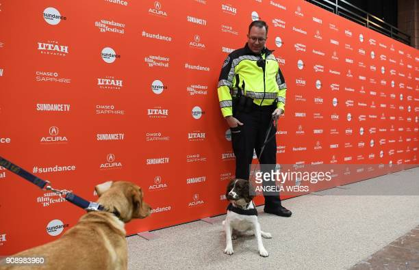 Two security dogs look at each other at the premiere of 'Ophelia' during the 2018 Sundance Film Festival at Eccles Center Theatre on January 22 2018...