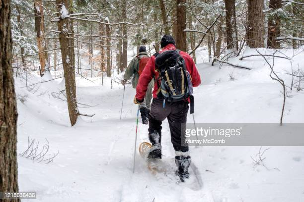 two senior men snowshoeing into a hemlock grove - murray mccomb stock pictures, royalty-free photos & images